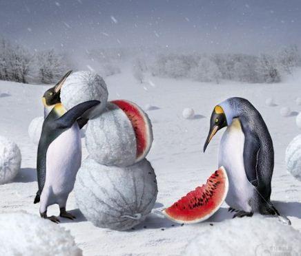 продвижение пингвинов